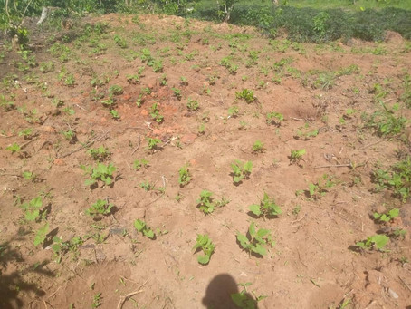 New Crops on Land