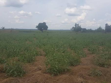Land in Uganda!
