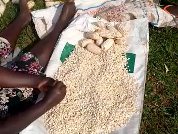 Shucking and Drying Corn to Share!!!