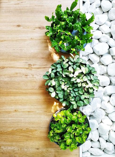 Arrangement de végétaux pour entreprise, sénographie végétale