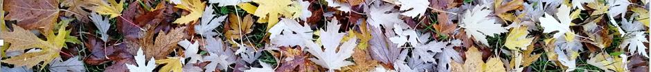 Les petits bonheurs d'automne se consomment... sans modération