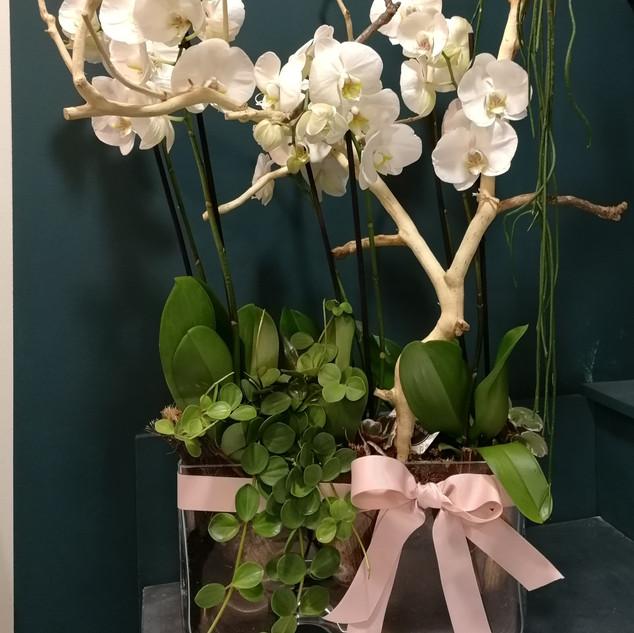 Composition d'orchidées