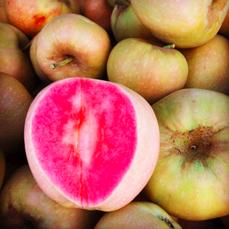 Розовый жемчуг
