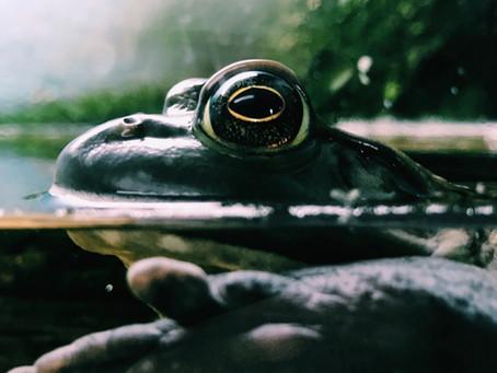 Una rana, una olla y la intermediación en Seguros…