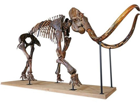 Mammoth skeleton sells for €430,000