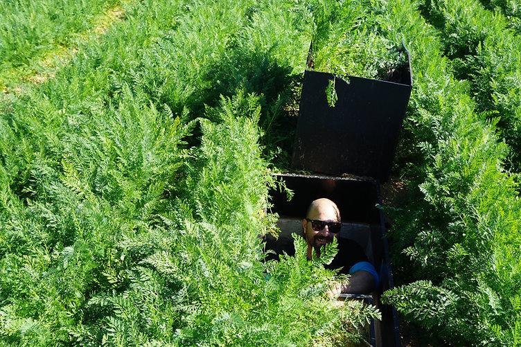 underground lysimeter carrot .JPG
