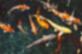 animals-fish-fishes-213399.jpg