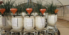 lysimeter carousel.JPG