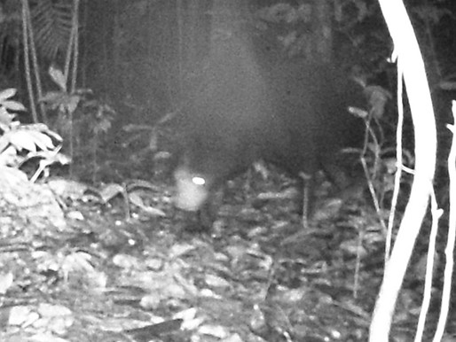 Case Study: Sumatra Camera Trap Project