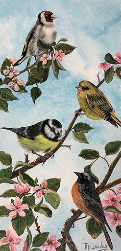 33)Oiseaux printemps IMG_4581.jpeg