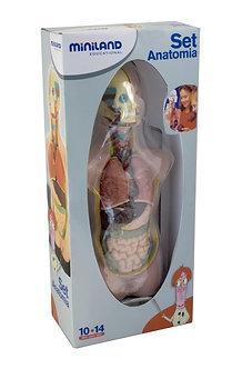 Conjunto Anatomia