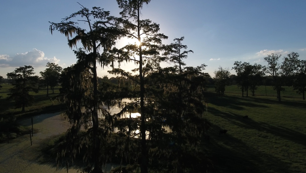 Cypress Trees and Sunsets