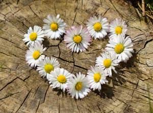 daisyheart