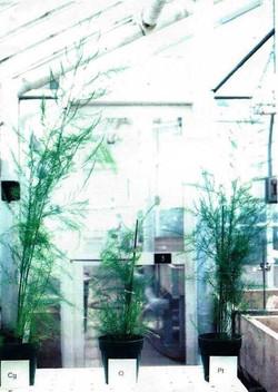 Asparagus Comparison at 4-months