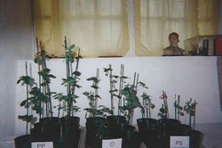 Soybean Comparison with Competitor