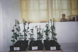 Soybean Comparison