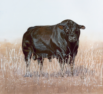 American Angus Bull.png