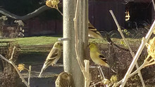 Are the birds ignoring your finch feeder?