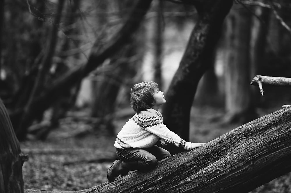boy on tree