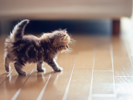 Simple ways to play with your kitten