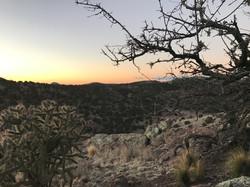 Tree sunrise day 2