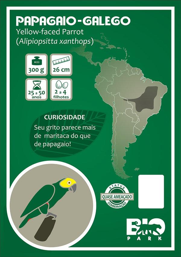 Papagaio-galego.jpg