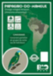 Papagaio-do-mangue.jpg