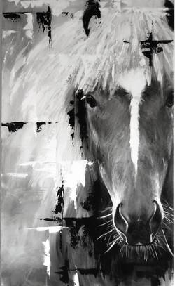 'Stufur', Icelandic horse
