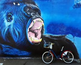 GorillaCapOne.jpg