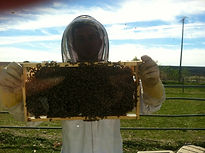 beewrangler in upland working on hives b
