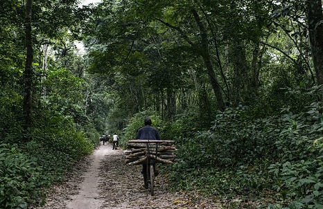 Carbon sinks/Norway at loggerheads with DR Congo over forest protection payments Climate Home News