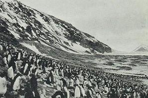 Ancient rookery threatened /  Tracking the history... of the world's largest penguin breedingcolony Massive