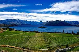Soil carbon /Bank... backs bringing agriculture into New ZealandETS... Carbon Pulse
