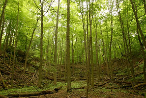 Near to capacity /...forests to gain only one-fifth more capacity to sequester carbon in next 60 years: study Xinhua