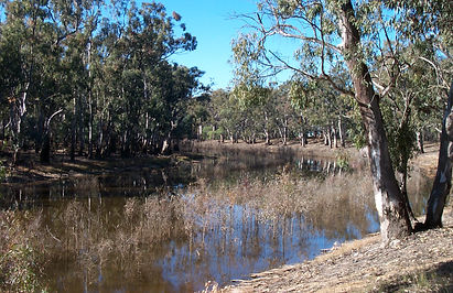 Too much stress/Ecosystems across Australia are collapsing under climatechange The Conversation