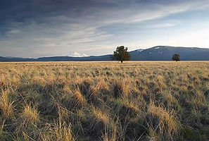 Carbon sequestering /Offset potential of California grasslands to exceed forests amid warming Carbon Pulse