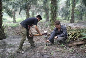 Oil palm /New research calculates full carbon cost... in Indonesia's forests Mongabay