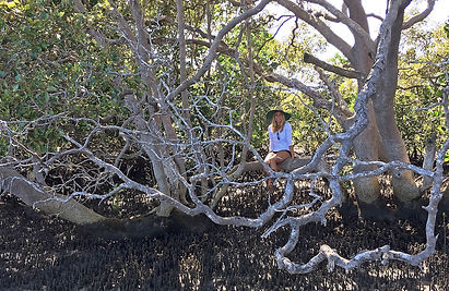 Blue carbon blues /Mangroves and their deforestation may emit more methane than we thought Mongabay