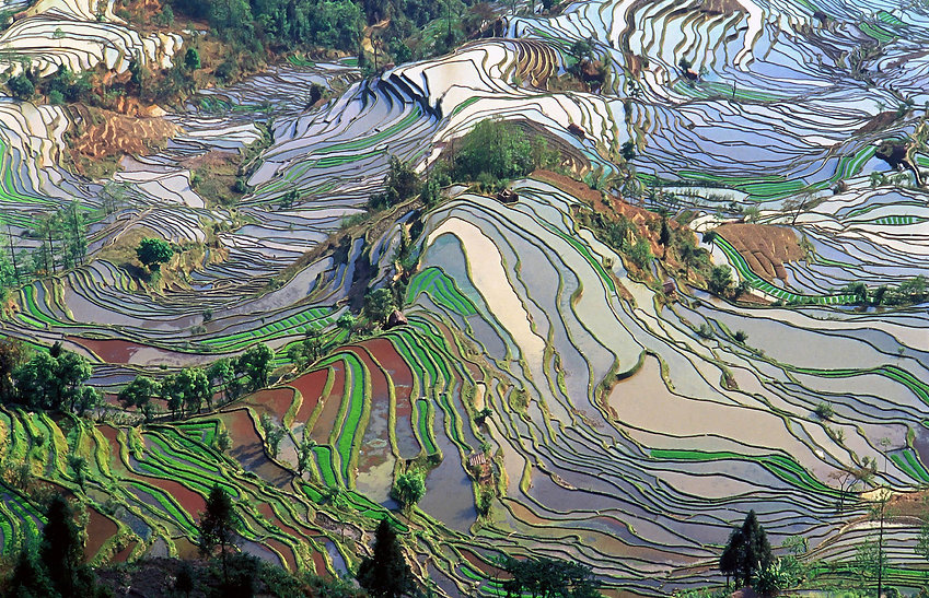 Staple foods /  Rice... could become less nutritious because of climate change   The Washington Post