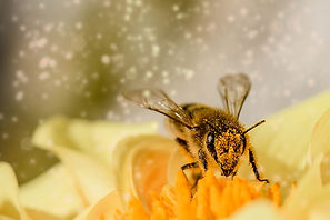 Bitter news /Climate Change Could Drive Bees in Warmer Regions to Extinction  EcoWatch