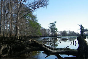 Blue Carbon /Upper Estuaries Found to Be Significant Blue Carbon Sink EOS Earth & Space Science News