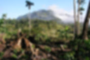 Avoiding deforestation /Peru agrees to 'nest' [fund] Althelia's REDD projects into its Paris efforts Carbon Pulse