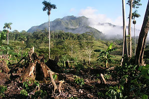 Avoiding deforestation / Peru agrees to 'nest' [fund] Althelia's REDD projects into its Paris efforts   Carbon Pulse