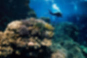 Coral bleaching /Coral oases that resist climate change offer 'glimmer of hope' for dying reefs Independent