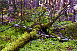 Carbon offsets /Fund Climate Trust Capital ties with green group on Maine forest project  Carbon Pulse