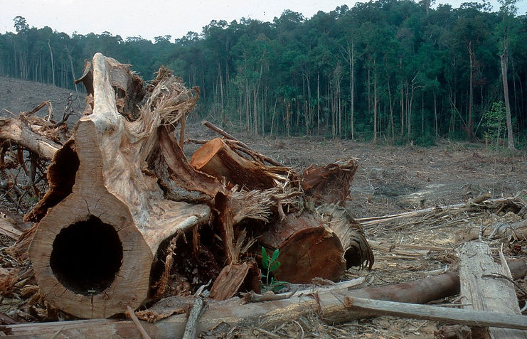 Humans let trees down again /Deforestation is accelerating, despite mounting efforts to protect tropical forests. What are we doingwrong? Eco-Business