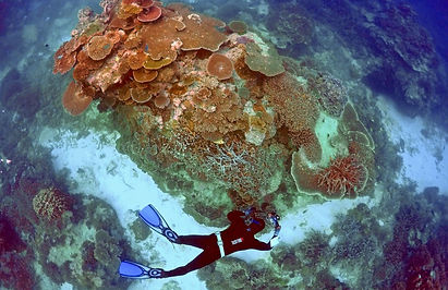 Australia /Great Barrier Reef Imperiled as Heat Worsens Die-Offs, Experts Say  The New York Times