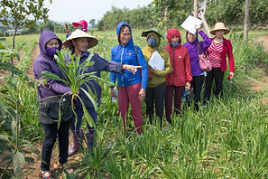 Farmer-to-farmer /How is climate-smart agriculture being communicated?  CGIAR
