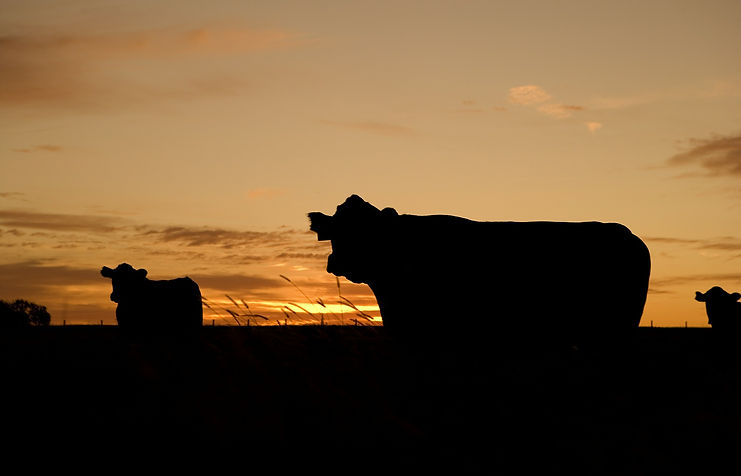 Rogue Agri Giants /Meat and dairy companies to surpass oil industry as world's biggestpolluters, report finds Independent