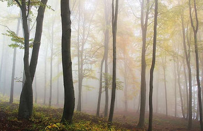 Climate stability threatened/Earth's intact forests vanishing at accelerating pace: scientists (Update) phys.org